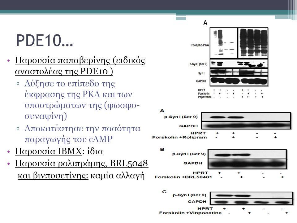 PDE10… Παρουσία παπαβερίνης (ειδικός αναστολέας της PDE10 )
