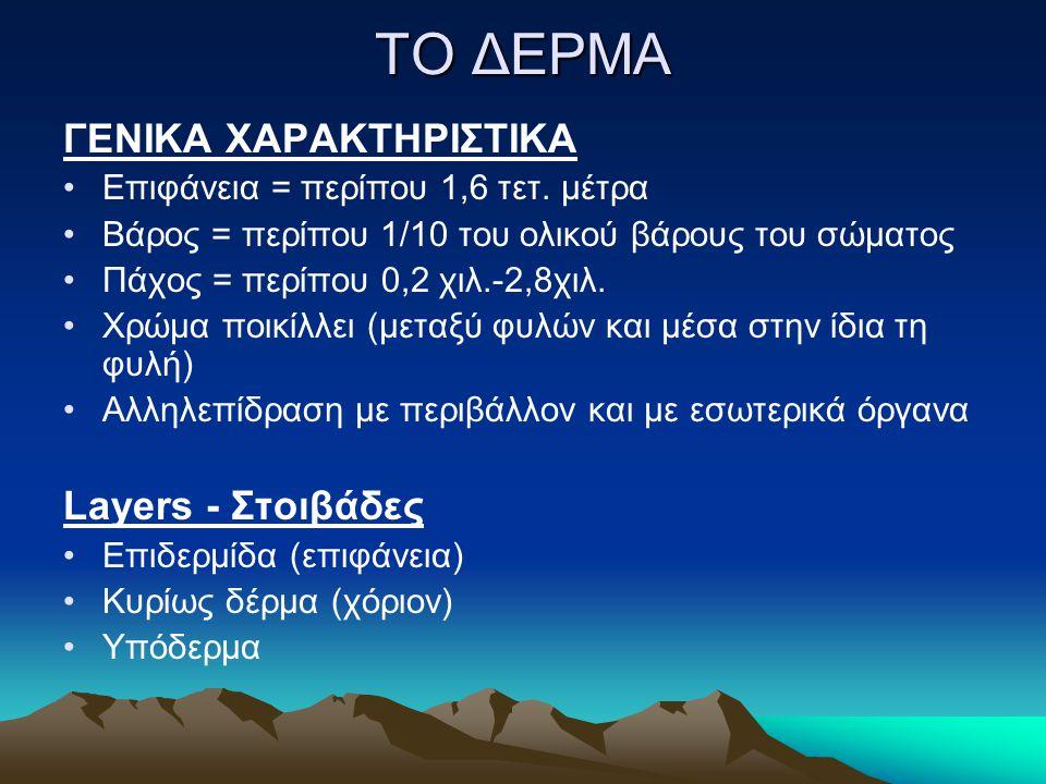 ΤΟ ΔΕΡΜΑ ΓΕΝΙΚΑ ΧΑΡΑΚΤΗΡΙΣΤΙΚΑ Layers - Στοιβάδες