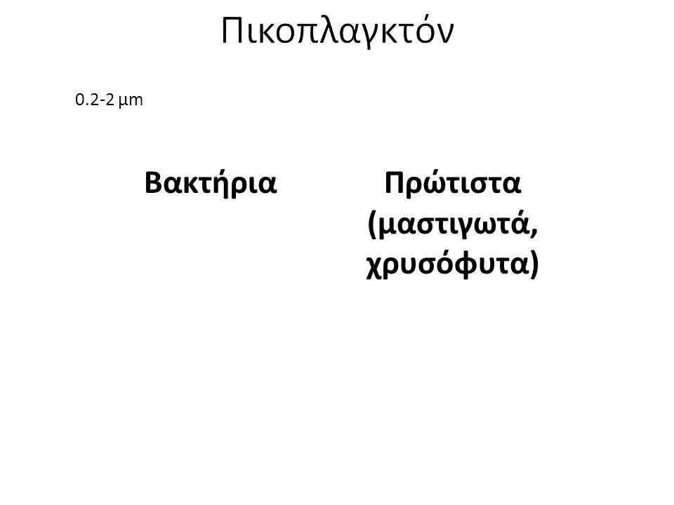 Πρώτιστα (μαστιγωτά, χρυσόφυτα)