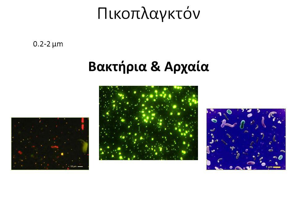 Πικοπλαγκτόν 0.2-2 μm Βακτήρια & Αρχαία