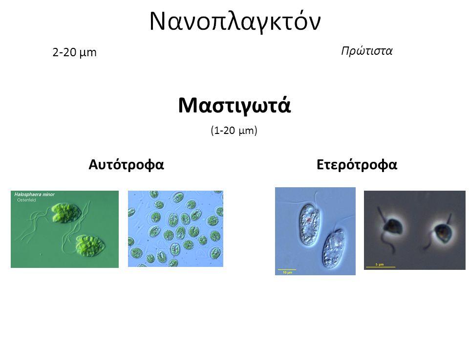Νανοπλαγκτόν 2-20 μm Πρώτιστα Μαστιγωτά (1-20 μm) Αυτότροφα Ετερότροφα