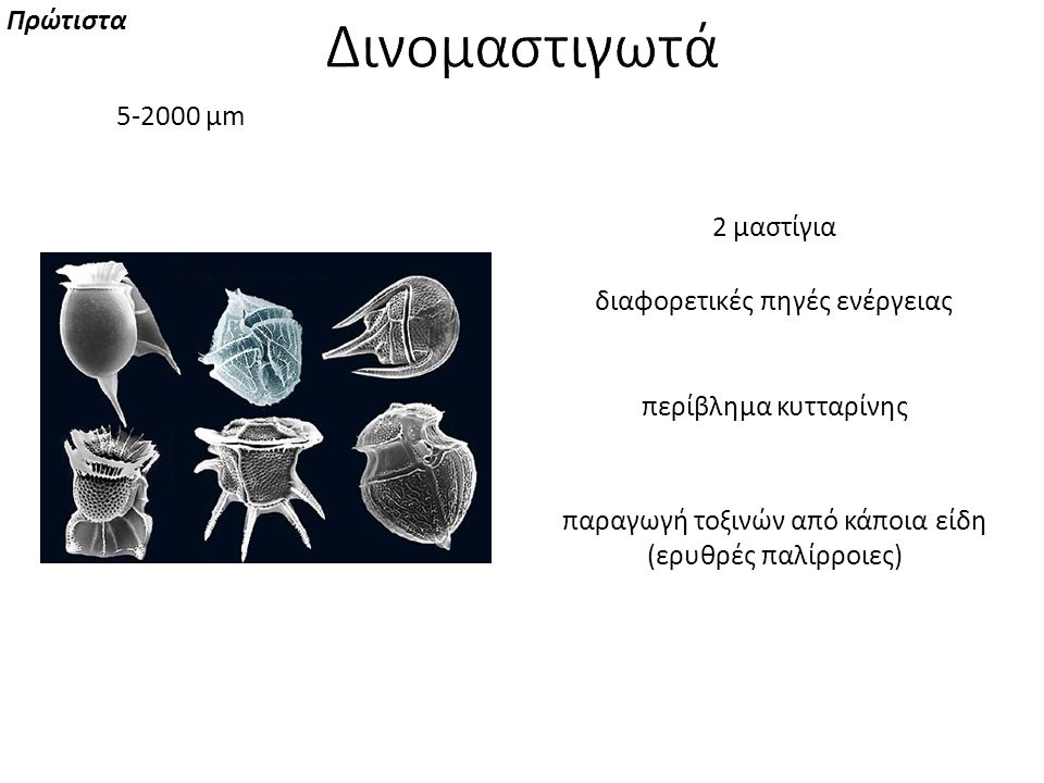Δινομαστιγωτά Πρώτιστα 5-2000 μm 2 μαστίγια