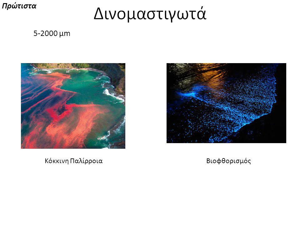 Πρώτιστα Δινομαστιγωτά 5-2000 μm Κόκκινη Παλίρροια Βιοφθορισμός