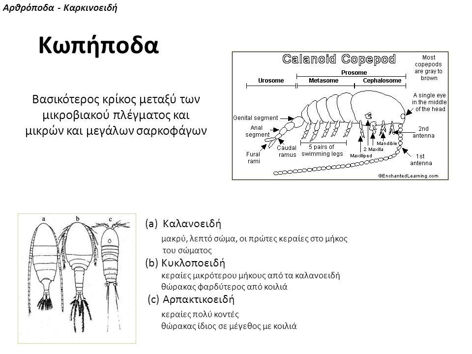 Αρθρόποδα - Καρκινοειδή