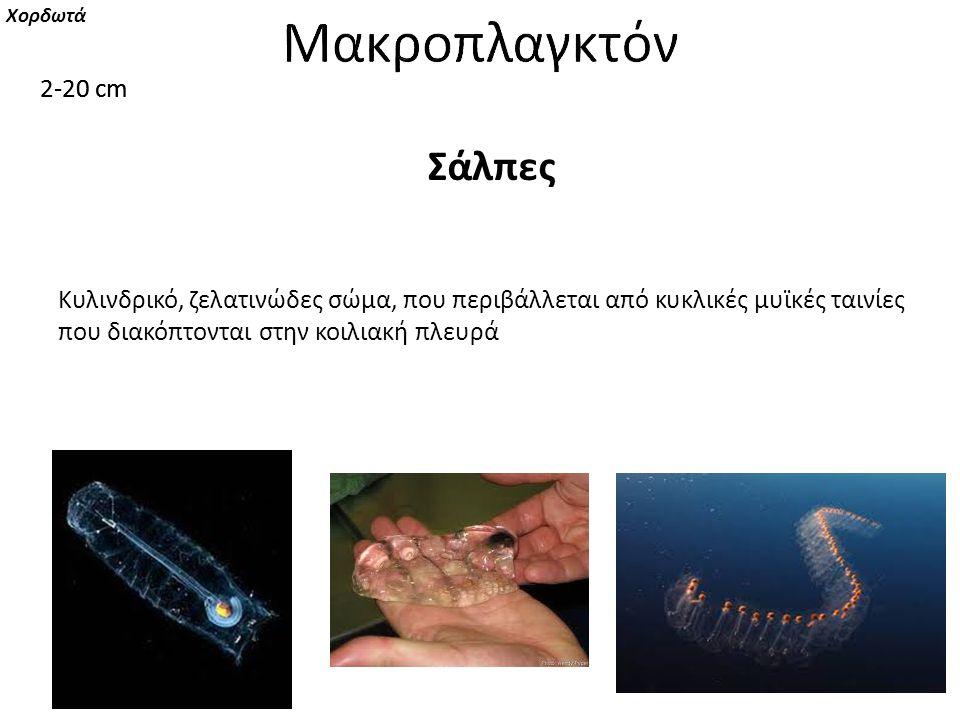 Μακροπλαγκτόν Μακροπλαγκτόν Σάλπες 2-20 cm 2-20 cm