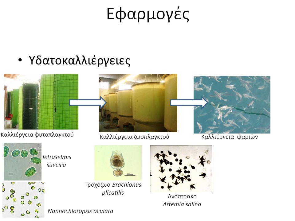 Εφαρμογές Υδατοκαλλιέργειες Καλλιέργεια φυτοπλαγκτού