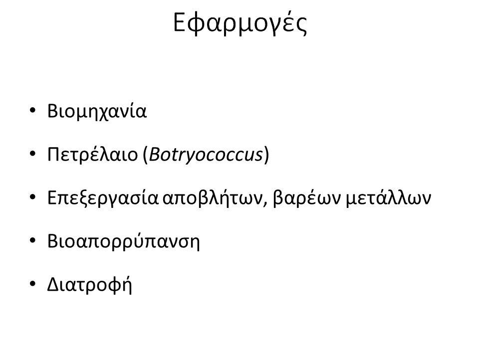 Εφαρμογές Βιομηχανία Πετρέλαιο (Botryococcus)