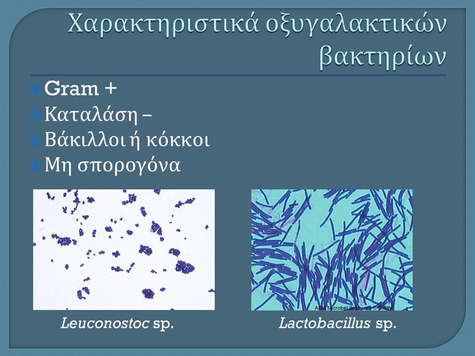 Χαρακτηριστικά οξυγαλακτικών βακτηρίων