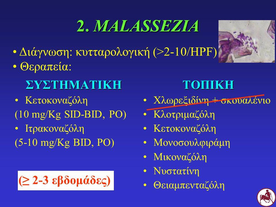 2. MALASSEZIA Διάγνωση: κυτταρολογική (>2-10/HPF) Θεραπεία: