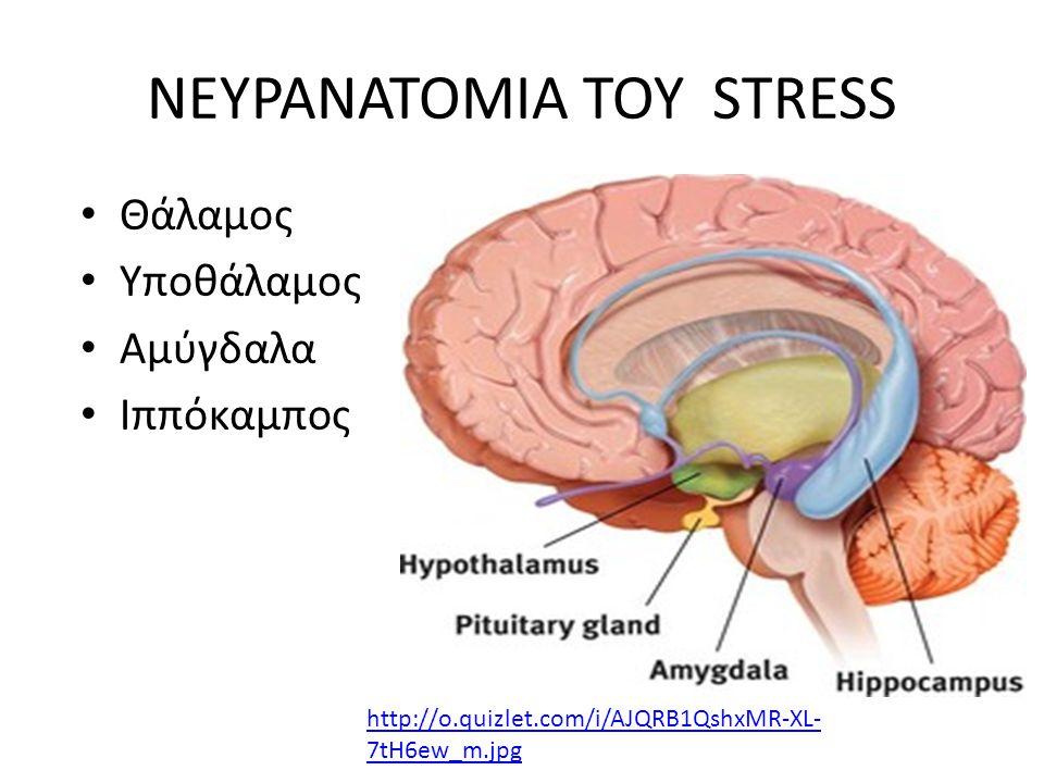 ΝΕΥΡΑΝΑΤΟΜΙΑ ΤΟΥ STRESS