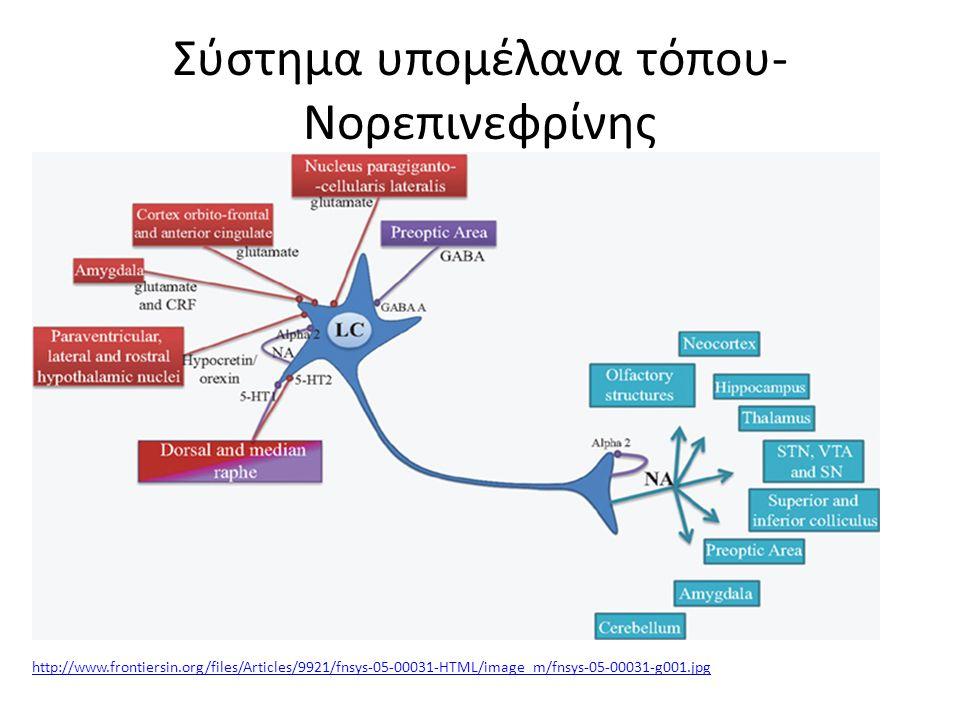 Σύστημα υπομέλανα τόπου-Νορεπινεφρίνης