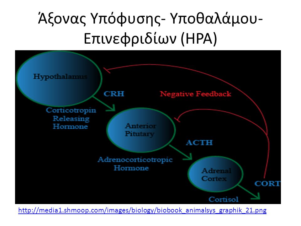 Άξονας Υπόφυσης- Υποθαλάμου- Επινεφριδίων (HPA)