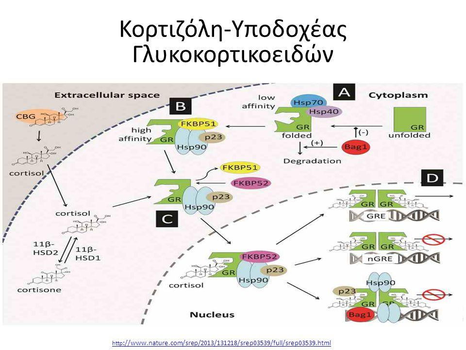 Κορτιζόλη-Υποδοχέας Γλυκοκορτικοειδών