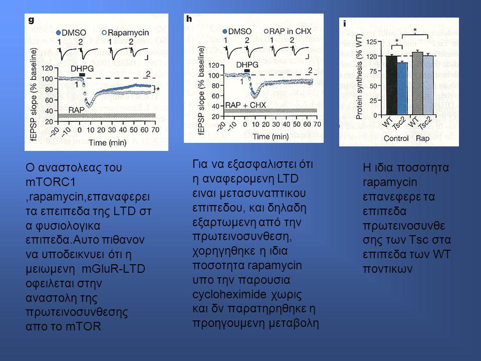 Για να εξασφαλιστει ότι η αναφερομενη LTD ειναι μετασυναπτικου επιπεδου, και δηλαδη εξαρτωμενη από την πρωτεινοσυνθεση, χορηγηθηκε η ιδια ποσοτητα rapamycin υπο την παρουσια cycloheximide χωρις και δν παρατηρηθηκε η προηγουμενη μεταβολη