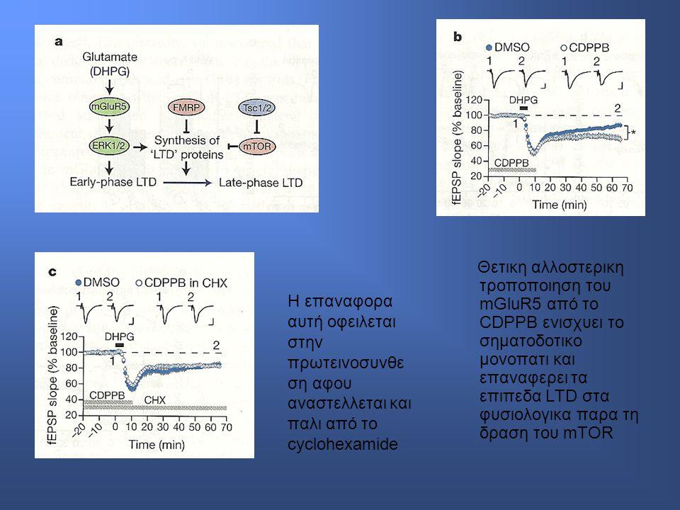 Θετικη αλλοστερικη τροποποιηση του mGluR5 από το CDPPB ενισχυει το σηματοδοτικο μονοπατι και επαναφερει τα επιπεδα LTD στα φυσιολογικα παρα τη δραση του mTOR