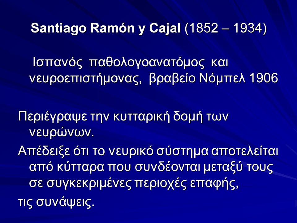 Santiago Ramón y Cajal (1852 – 1934)
