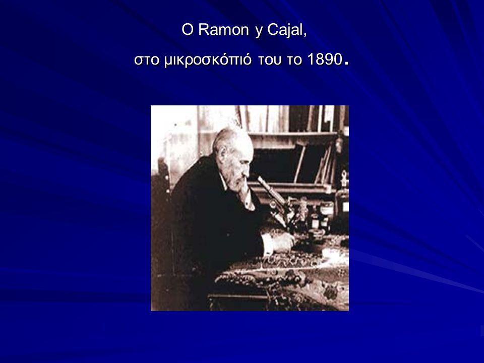 O Ramon y Cajal, στο μικροσκόπιό του το 1890.