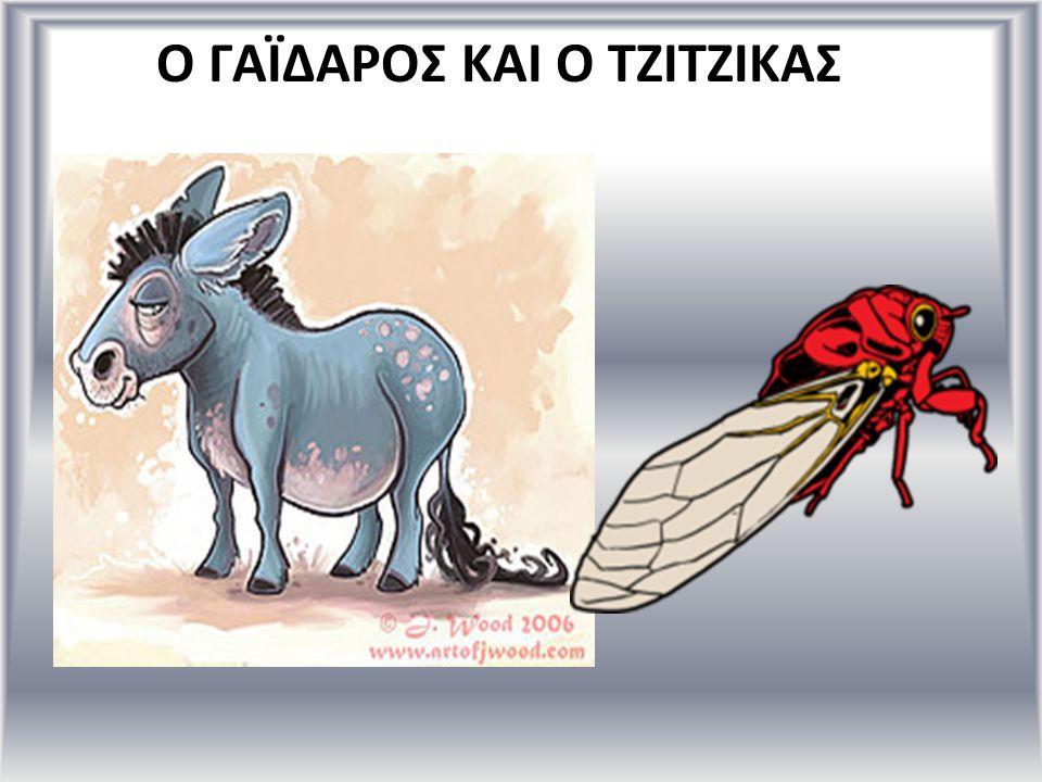 Ο ΓΑΪΔΑΡΟΣ ΚΑΙ Ο ΤΖΙΤΖΙΚΑΣ
