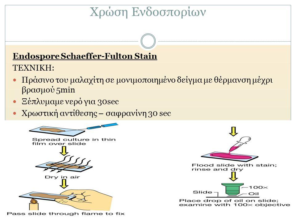 Χρώση Ενδοσπορίων Endospore Schaeffer-Fulton Stain ΤΕΧΝΙΚΗ: