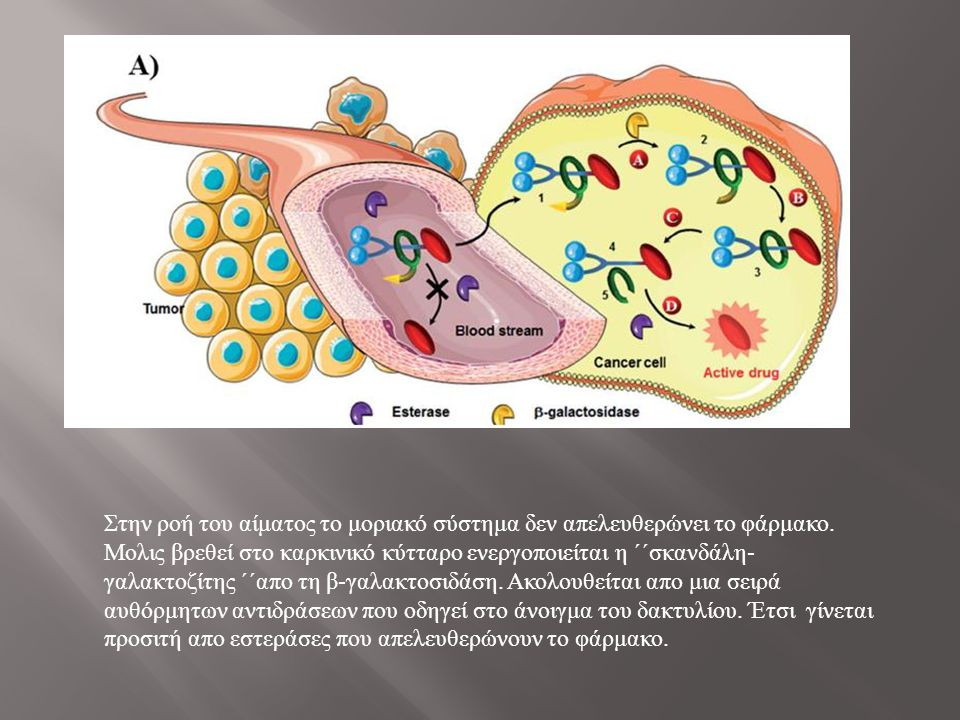 Στην ροή του αίματος το μοριακό σύστημα δεν απελευθερώνει το φάρμακο