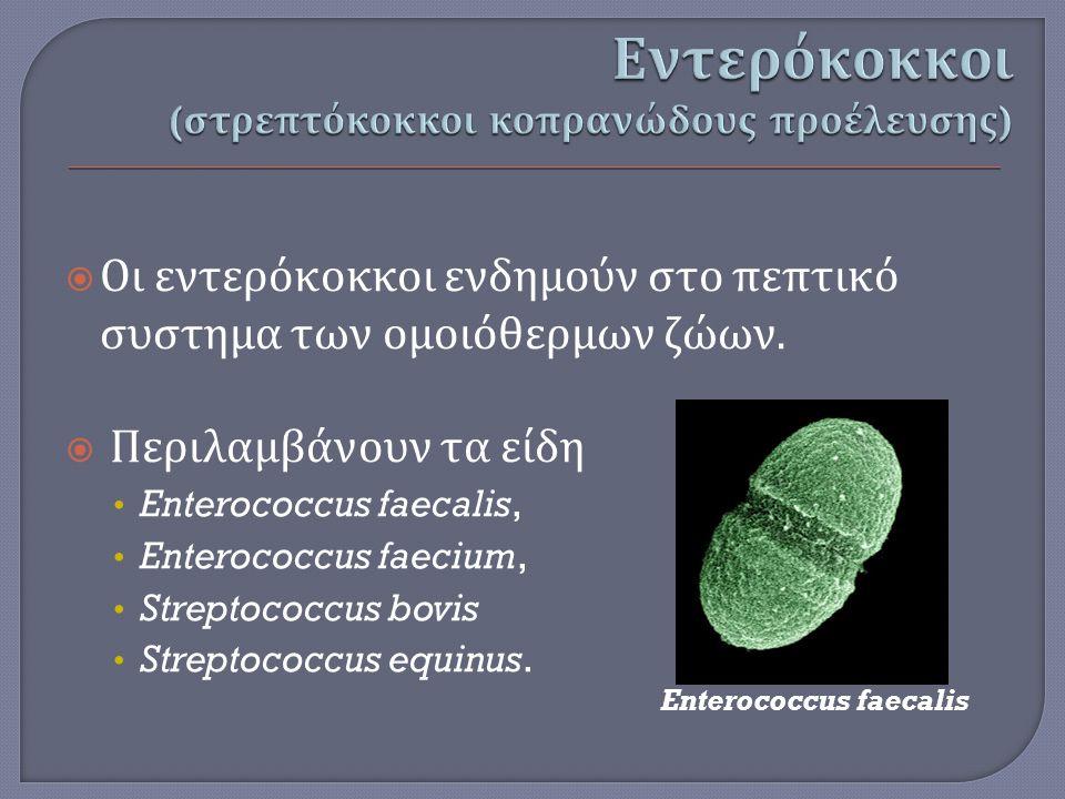 Εντερόκοκκοι (στρεπτόκοκκοι κοπρανώδους προέλευσης)