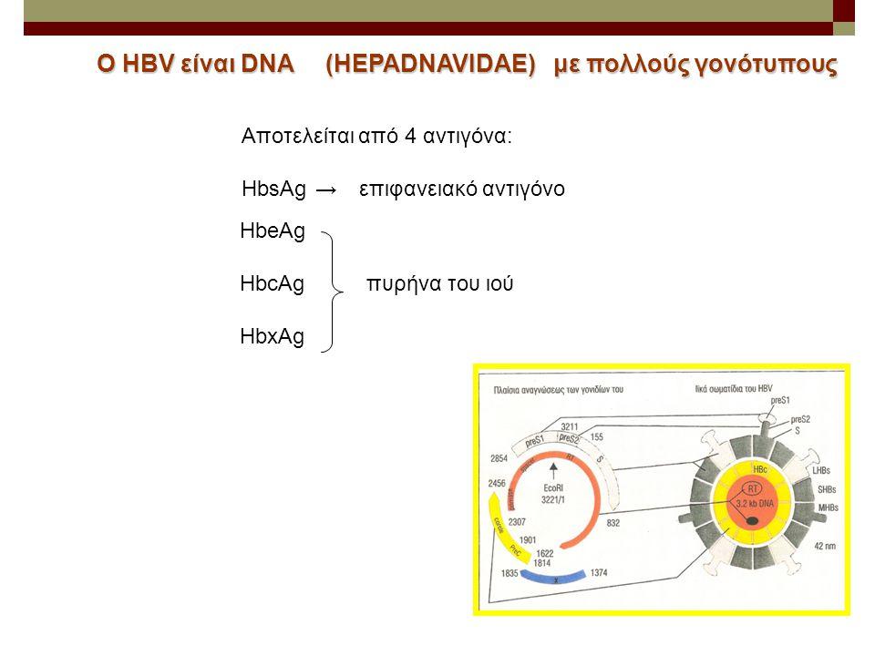 Ο HBV είναι DNA (HEPADNAVIDAE) με πολλούς γονότυπους