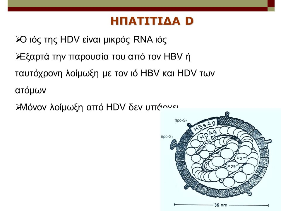 ΗΠΑΤΙΤΙΔΑ D Ο ιός της HDV είναι μικρός RNA ιός