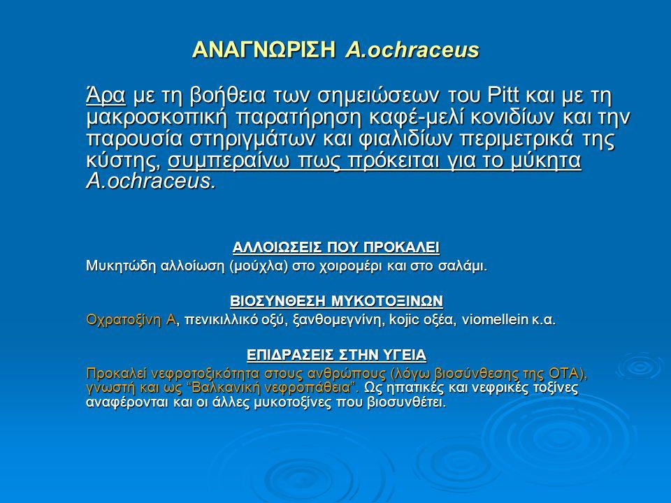 ΑΝΑΓΝΩΡΙΣΗ A.ochraceus