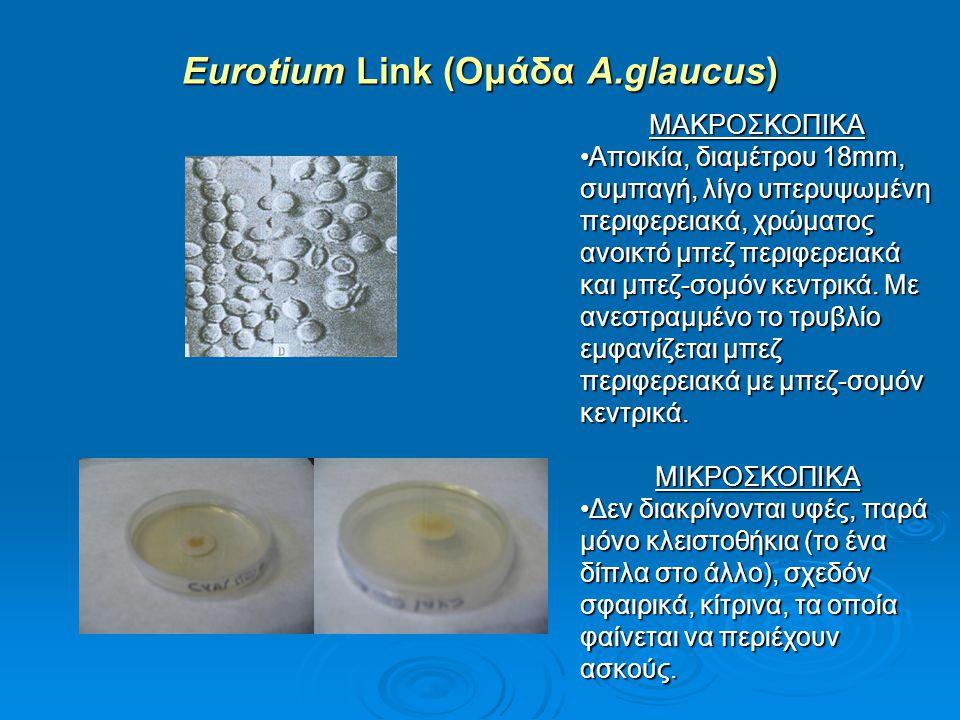 Eurotium Link (Ομάδα A.glaucus)
