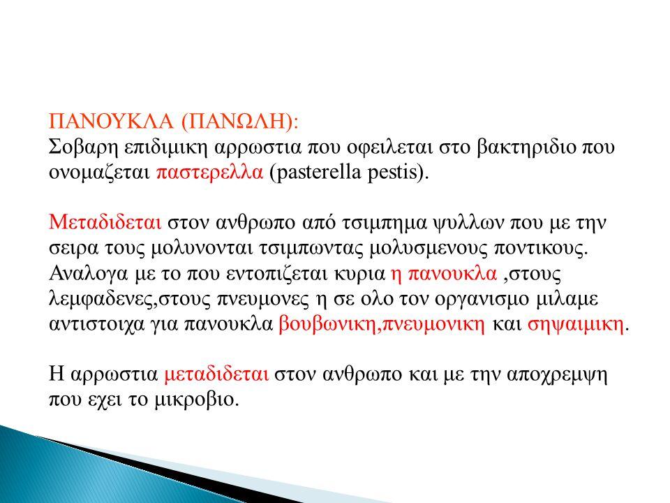 ΠΑΝΟΥΚΛΑ (ΠΑΝΩΛΗ): Σοβαρη επιδιμικη αρρωστια που οφειλεται στο βακτηριδιο που ονομαζεται παστερελλα (pasterella pestis).