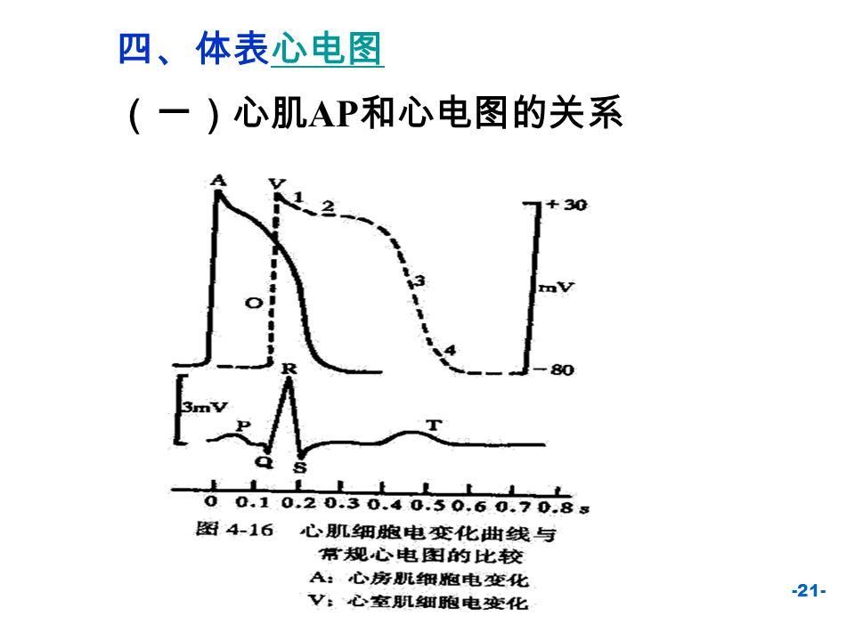 四、体表心电图 (一)心肌AP和心电图的关系