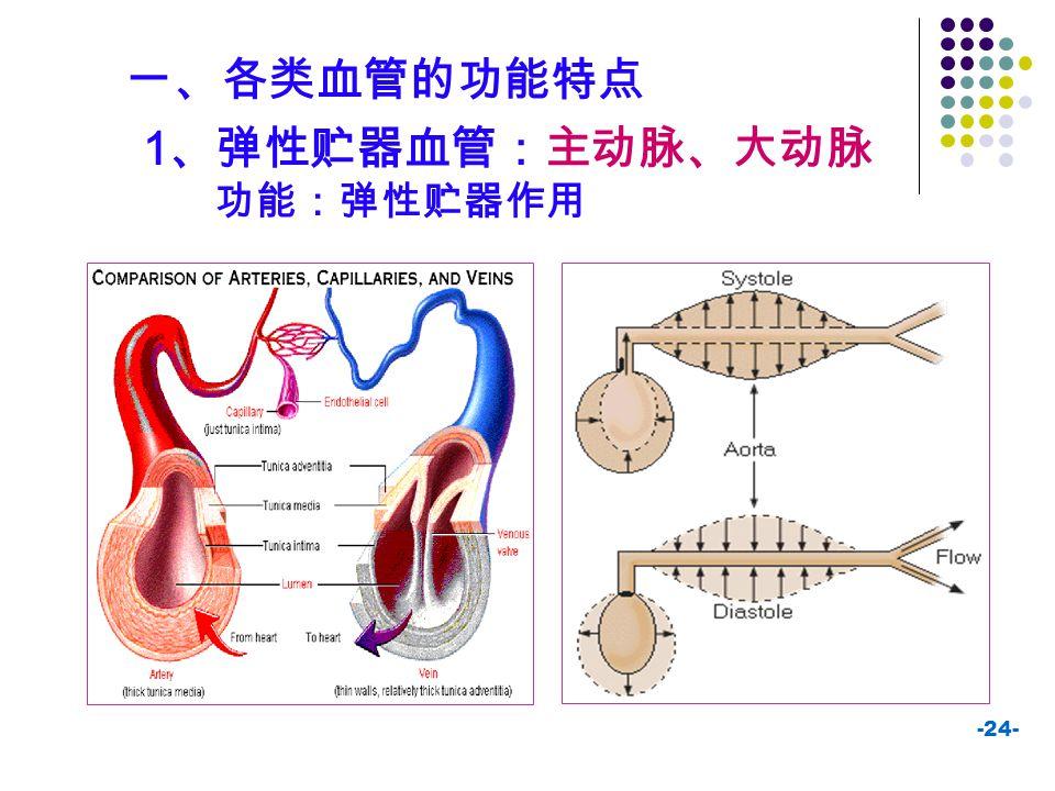 一、各类血管的功能特点 1、弹性贮器血管:主动脉、大动脉 功能:弹性贮器作用