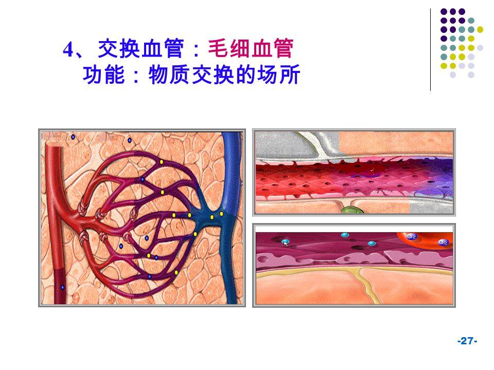 4、交换血管:毛细血管 功能:物质交换的场所