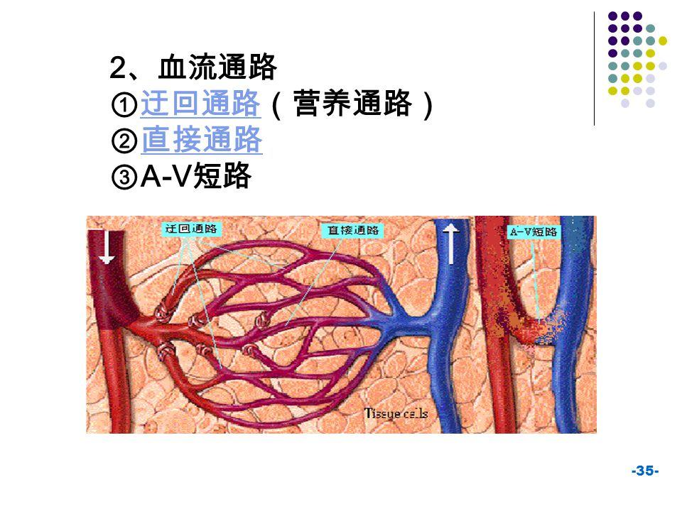 2、血流通路 ①迂回通路(营养通路) ②直接通路 ③A-V短路
