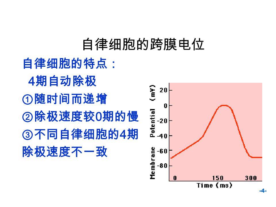 自律细胞的跨膜电位 自律细胞的特点: 4期自动除极 ①随时间而递增 ②除极速度较0期的慢 ③不同自律细胞的4期 除极速度不一致