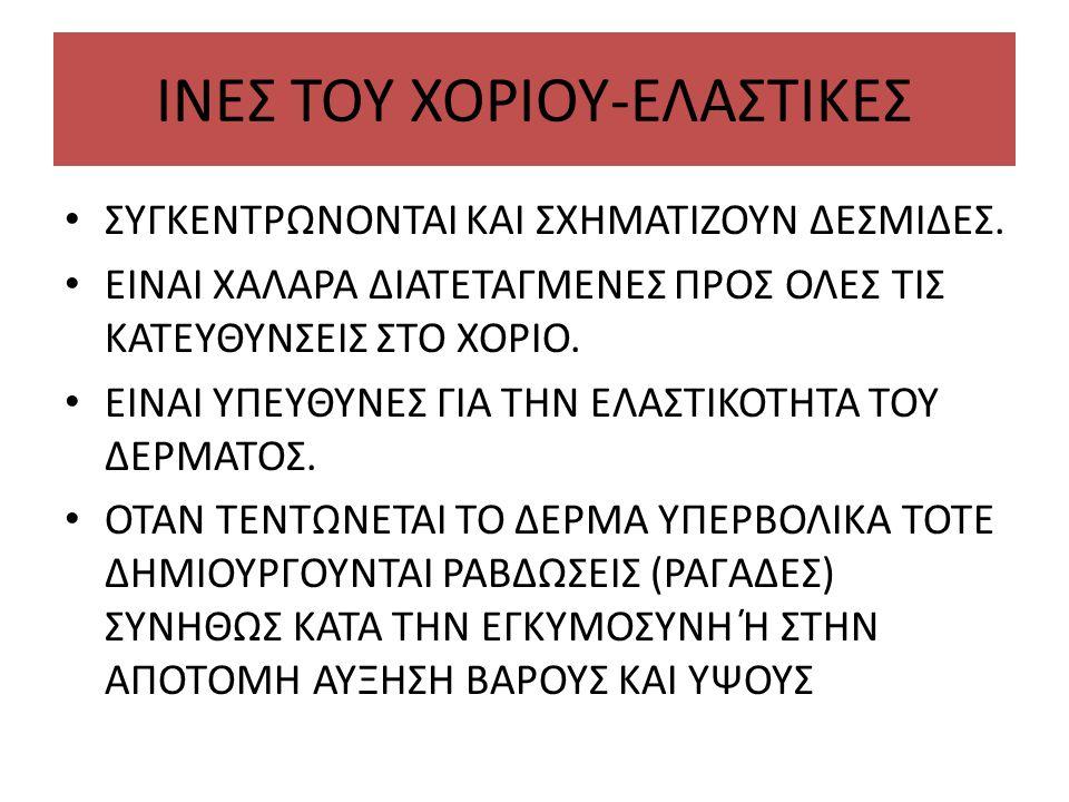 ΙΝΕΣ ΤΟΥ ΧΟΡΙΟΥ-ΕΛΑΣΤΙΚΕΣ