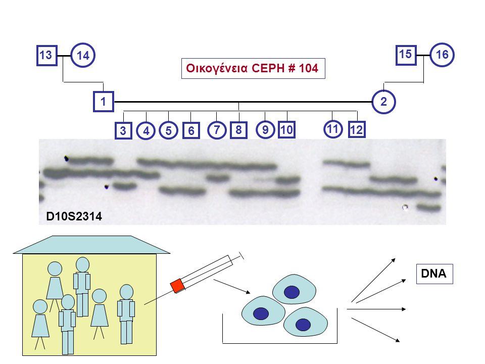 13 14 15 16 Οικογένεια CEPH # 104 1 2 3 4 5 6 7 8 9 10 11 12 D10S2314 DNA