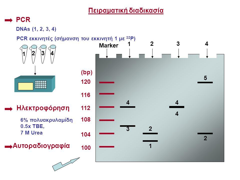 Πειραματική διαδικασία PCR