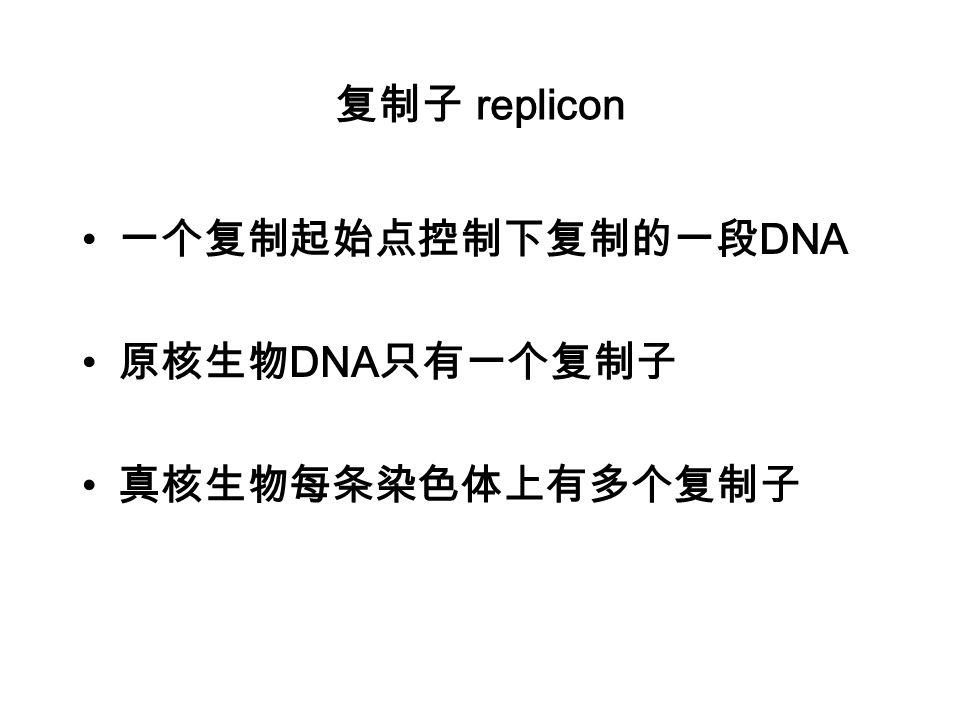 复制子 replicon 一个复制起始点控制下复制的一段DNA 原核生物DNA只有一个复制子 真核生物每条染色体上有多个复制子