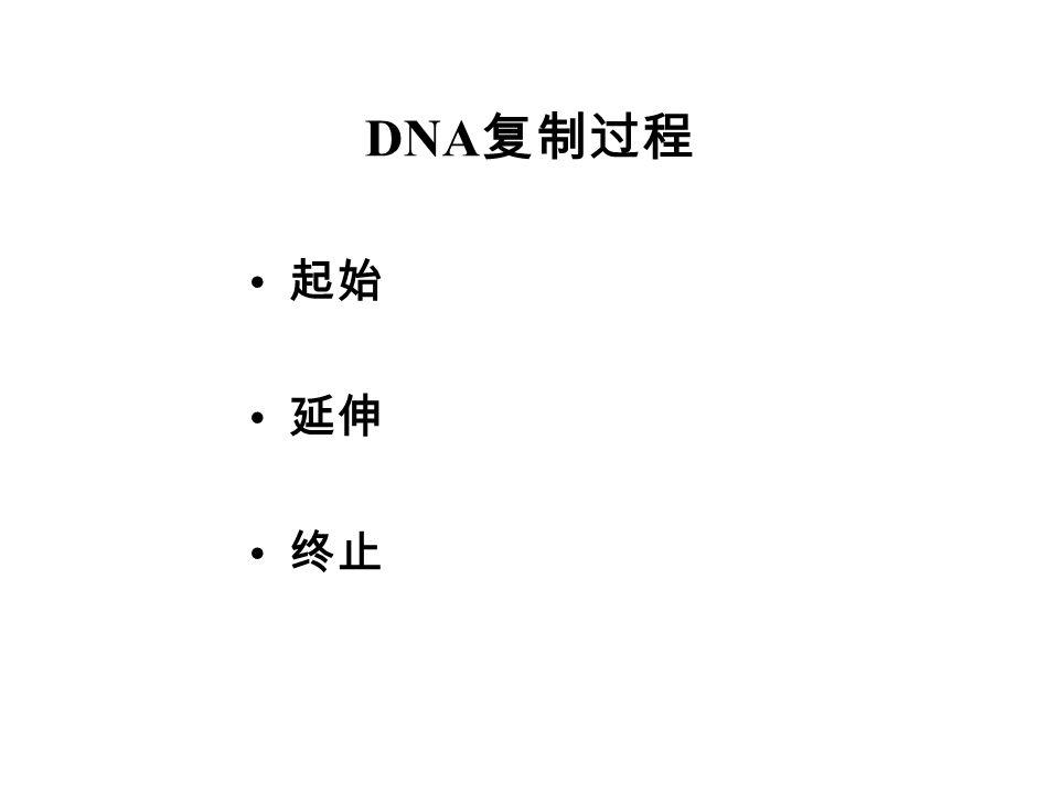 DNA复制过程 起始 延伸 终止