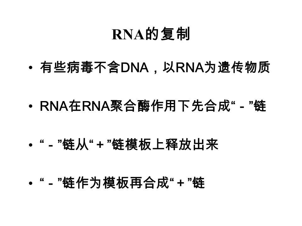 RNA的复制 有些病毒不含DNA,以RNA为遗传物质 RNA在RNA聚合酶作用下先合成 - 链 - 链从 + 链模板上释放出来