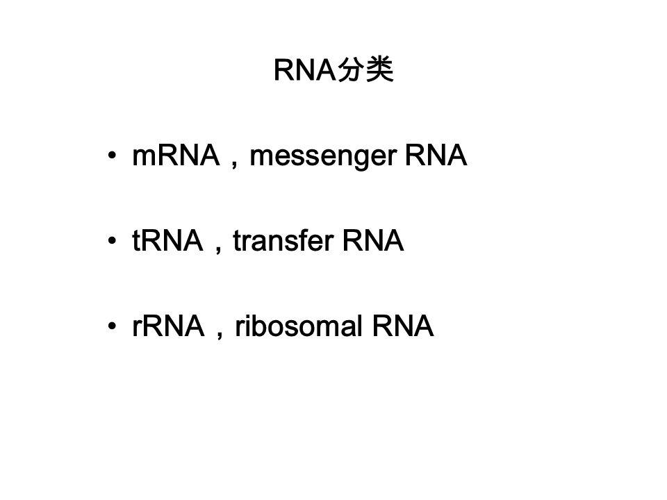 RNA分类 mRNA,messenger RNA tRNA,transfer RNA rRNA,ribosomal RNA