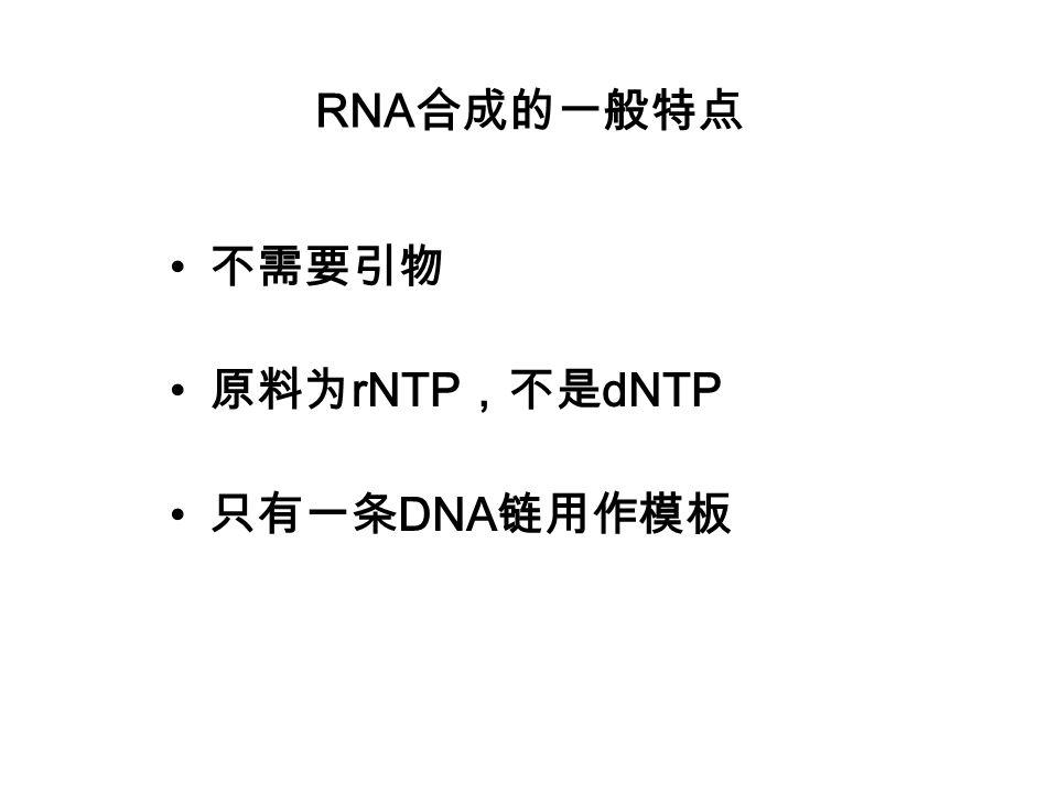 RNA合成的一般特点 不需要引物 原料为rNTP,不是dNTP 只有一条DNA链用作模板