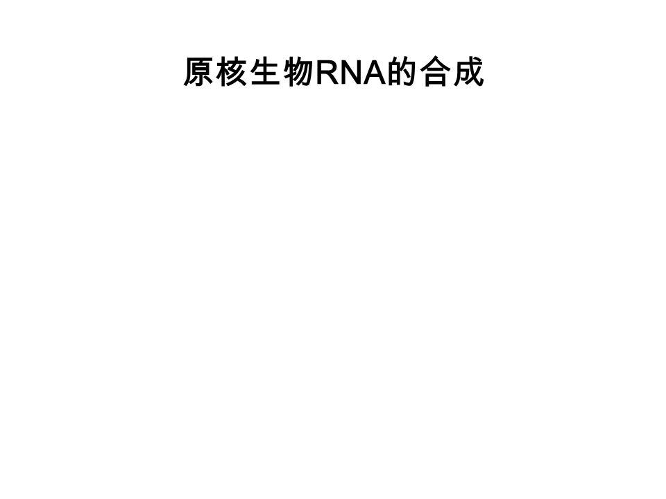 原核生物RNA的合成