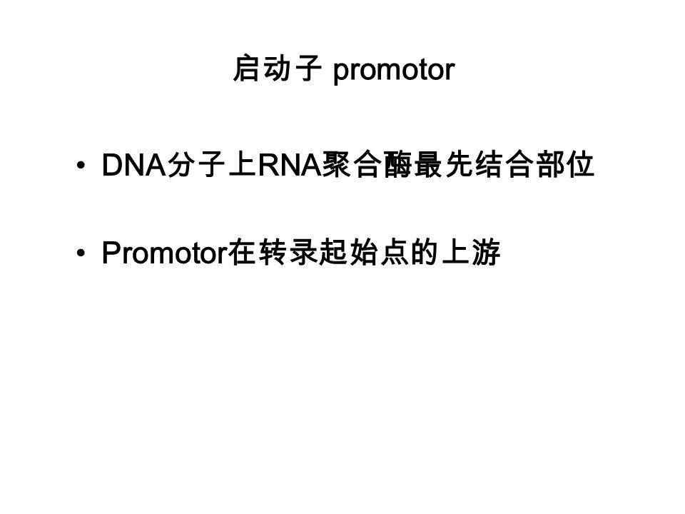 启动子 promotor DNA分子上RNA聚合酶最先结合部位 Promotor在转录起始点的上游