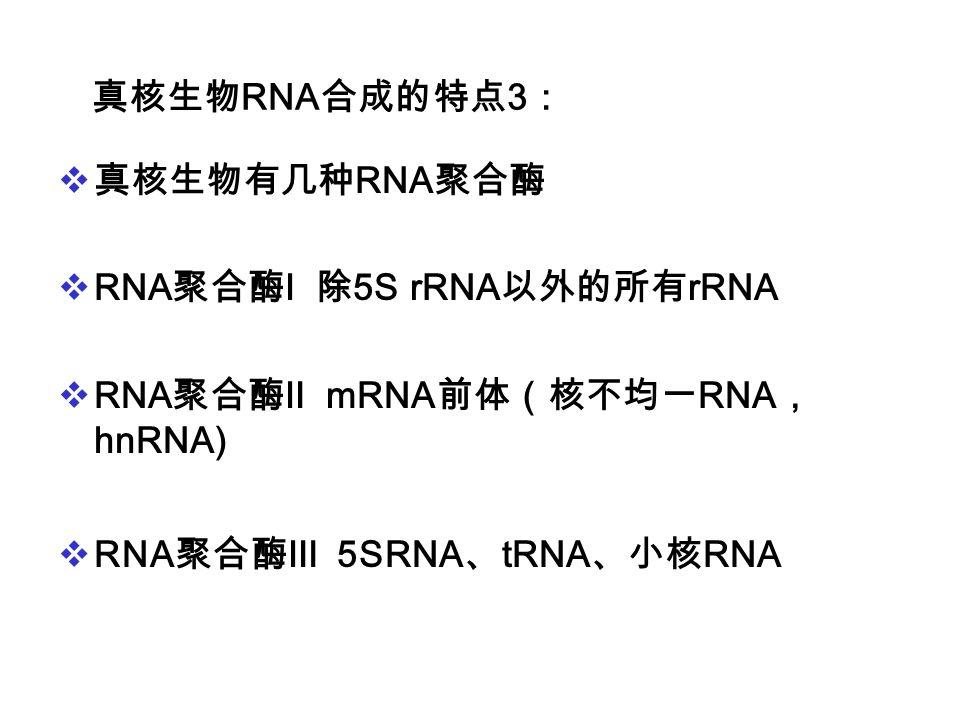 真核生物RNA合成的特点3: 真核生物有几种RNA聚合酶. RNA聚合酶Ⅰ 除5S rRNA以外的所有rRNA.