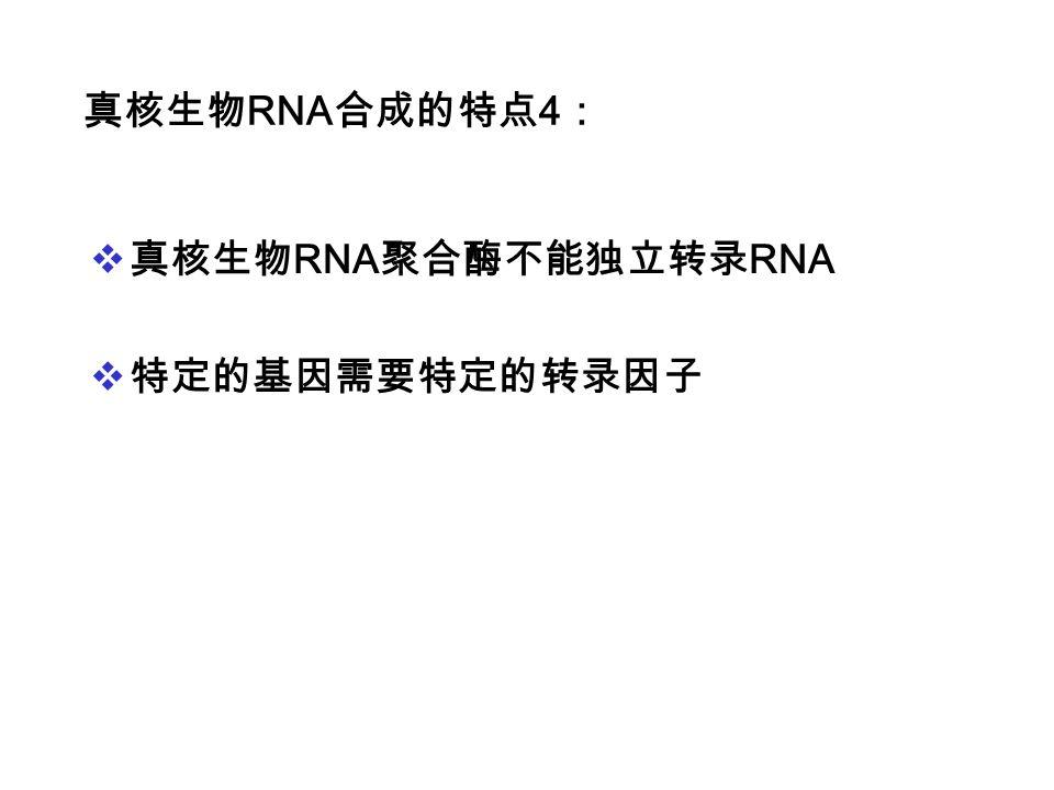 真核生物RNA合成的特点4: 真核生物RNA聚合酶不能独立转录RNA 特定的基因需要特定的转录因子