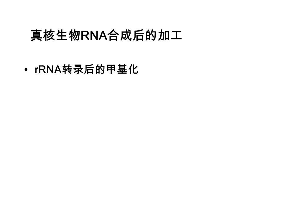 真核生物RNA合成后的加工 rRNA转录后的甲基化