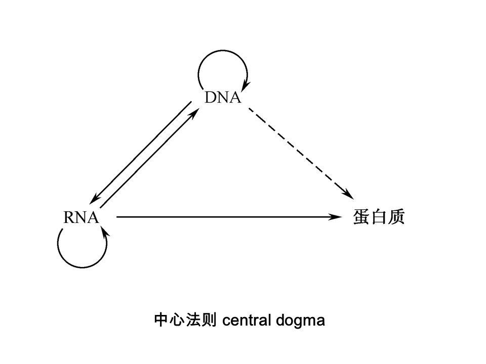 中心法则 central dogma