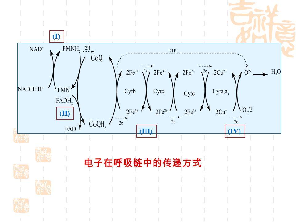(I) (II) (III) (IV) 电子在呼吸链中的传递方式